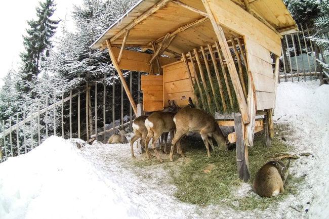 Erfahrungsbericht - Ennstaler Wildfutter