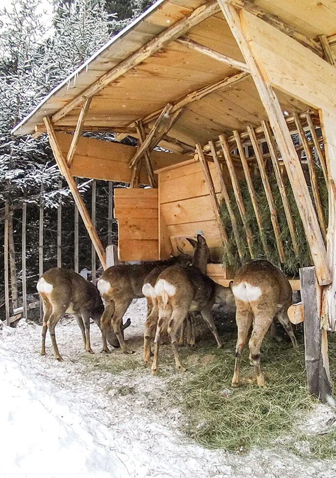 Ennstaler Wildfutter - Futter Tiroler Mischung
