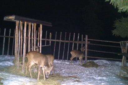 Tipps für die Fütterung - Ennstaler Wildfutter